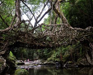 Puentes Colgantes de Meghalaya