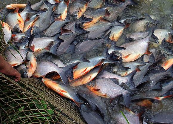 proyecto de peces