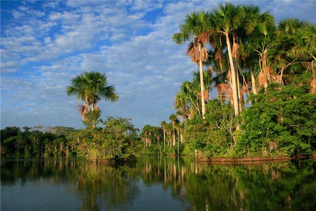 El paraíso Amazónico llamado Manu
