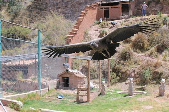 Conoce más sobre el Santuario Animal de Cochahuasi