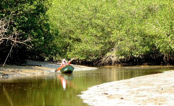 Visita el Santuario nacional Manglares de Tumbes y disfruta de la aventura