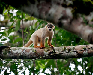 Fauna Selva Alta Peruana