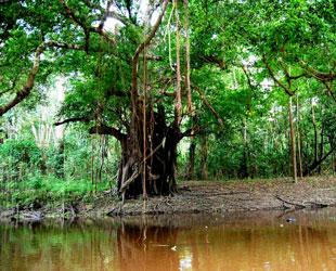 Selva Baja - Perú