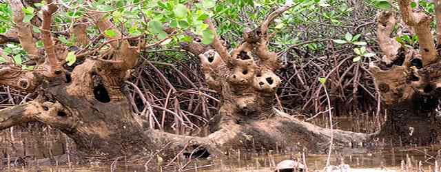 Santuario Nacional de Tumbes