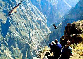 Condor en el Cañon del Colca