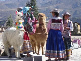 Vicuña Arequipa
