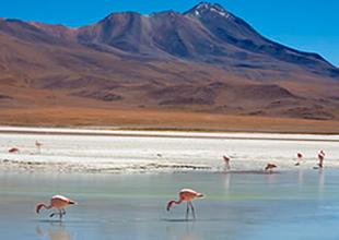 Desierto de los Lipes Chile