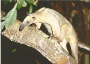 fauna en el amazonas